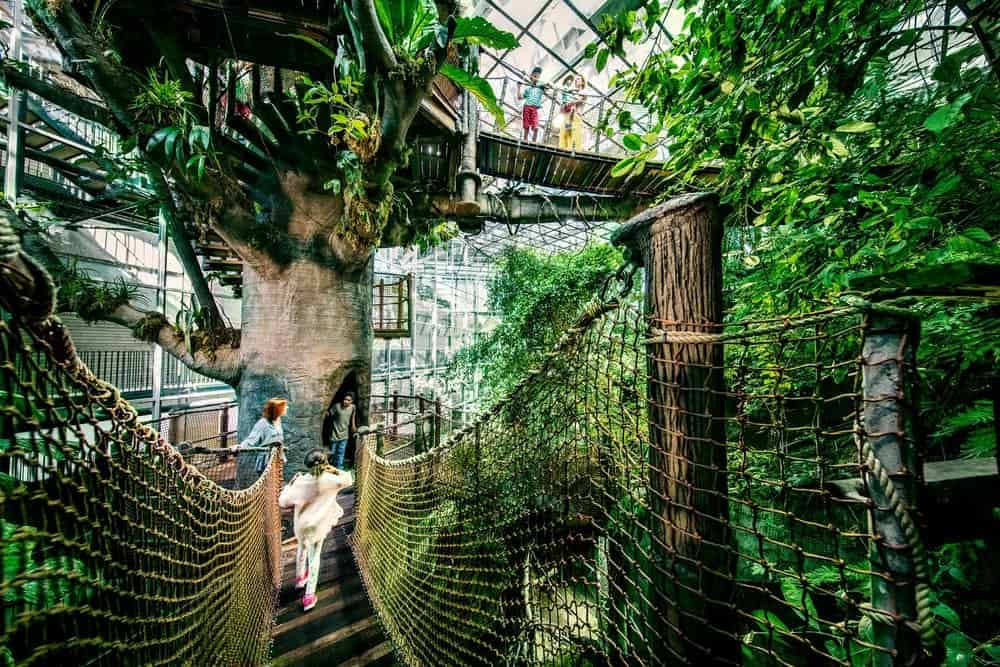 Kids playoing around in the rainforest at universeum.